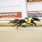 Race 1 5/8/15