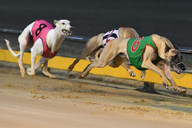 Mossimo Bale overtakes Monster Fish in the home straight with Poke The Bear in third position.