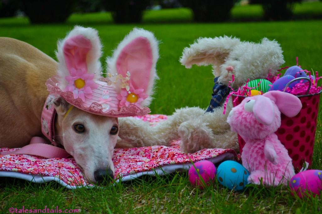 Easter Greyhound