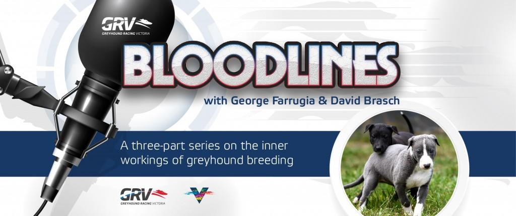 GRV_Podcast_Breeding-Bloodlines_GRV-Web-Slider_955x400