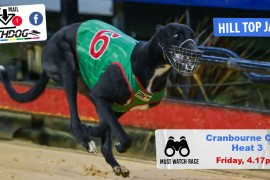 Daily Mail: Classy Cup heats at Cranbourne